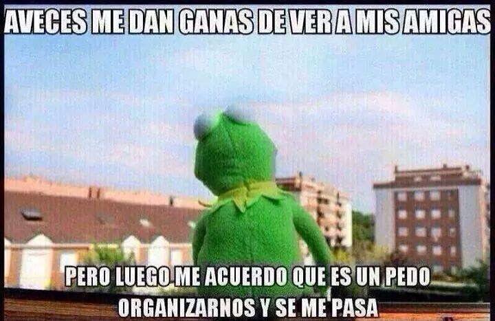 Rana Rene Meme Mexican Humor Spanish Kermet The Frog Mexican Humor Humor Funny Memes