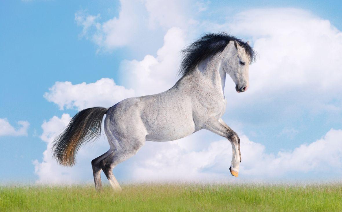 Great Wallpaper Horse Beauty - 6252d7b33a0793a77263b8181b1c7e72  Collection_904640.jpg