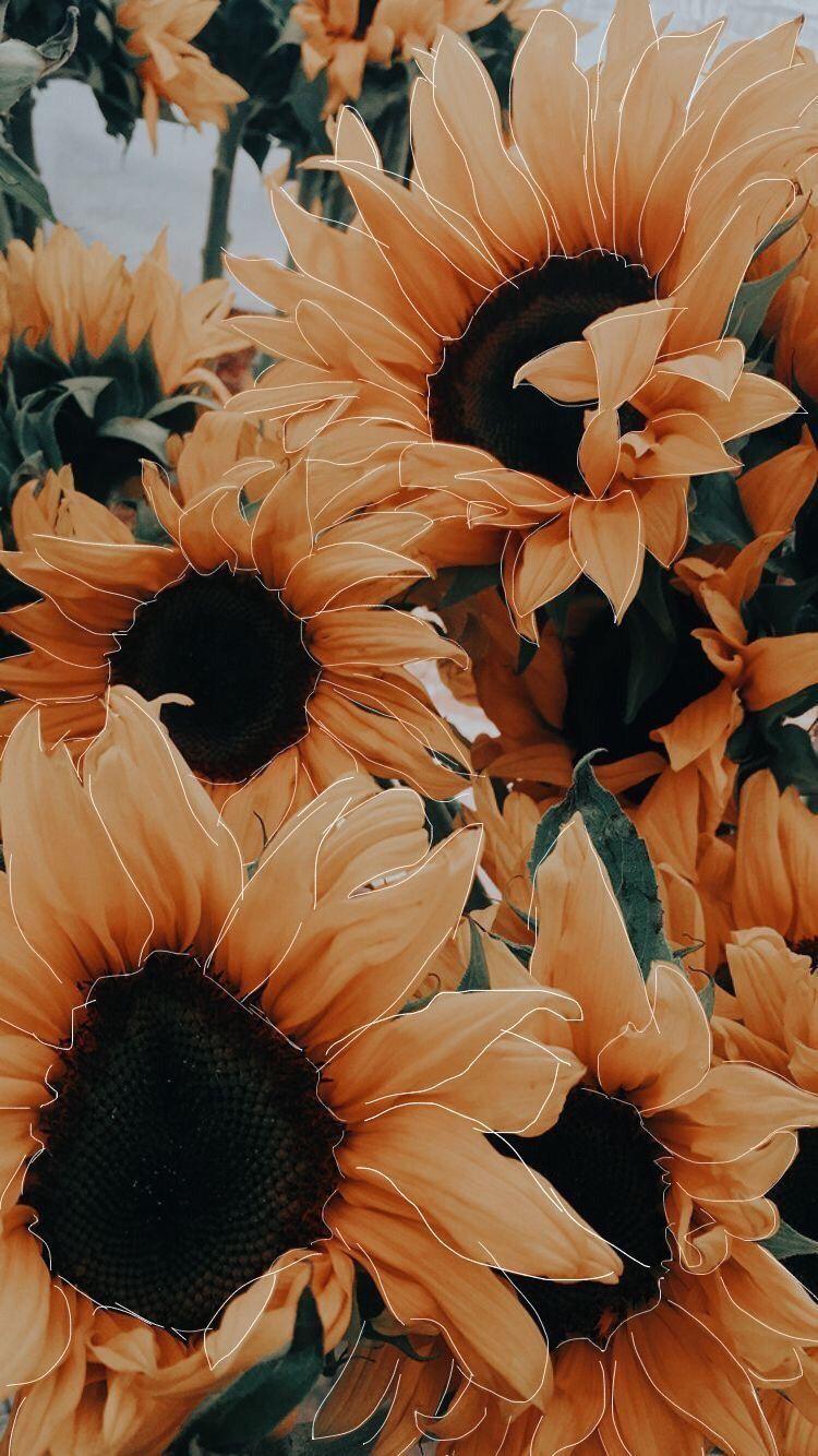 Gelbe Sonnenblume ästhetisch bearbeiten #iphonelockscreen