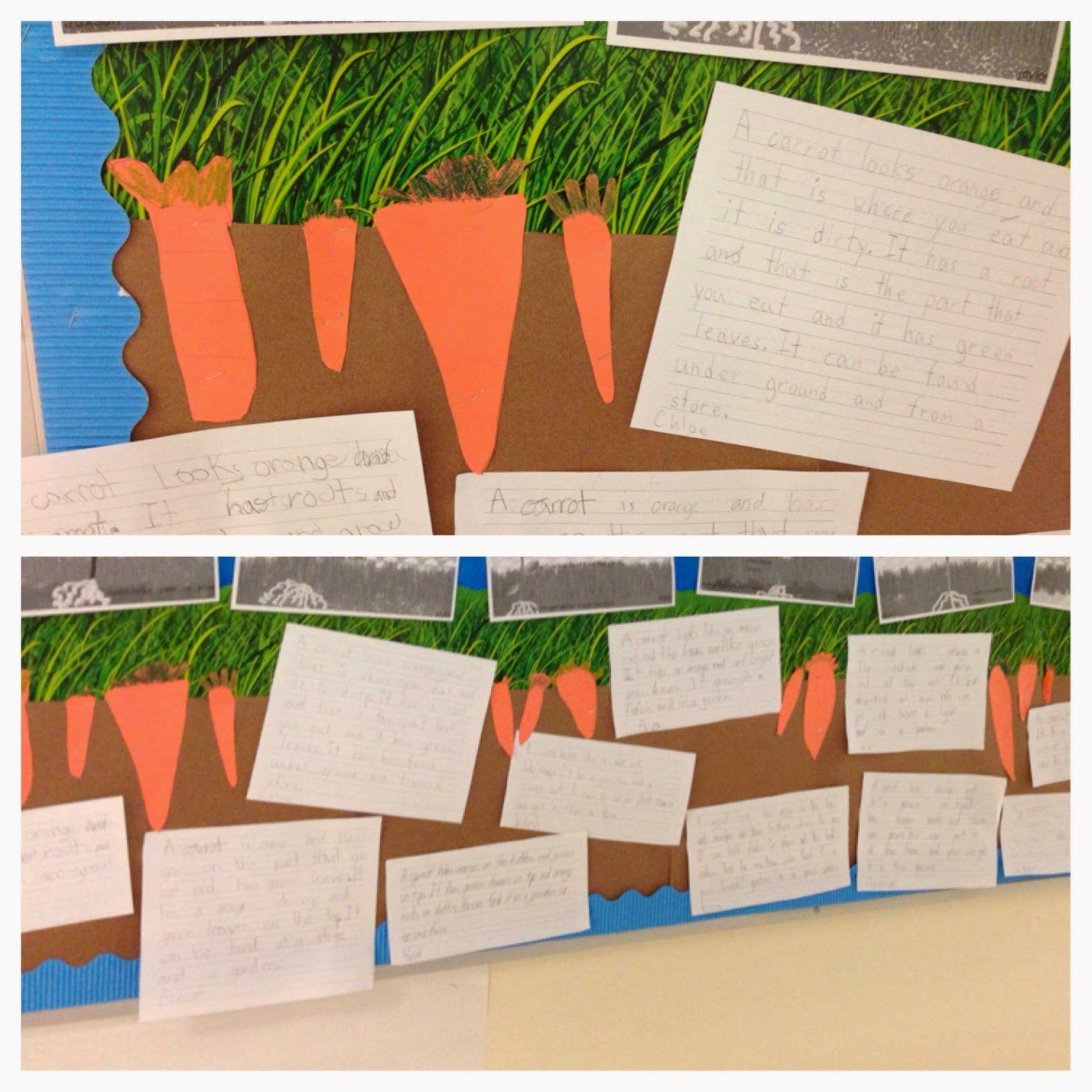 Bishop's Blackboard: A First Grade Blog - Carrot Descriptive Writing