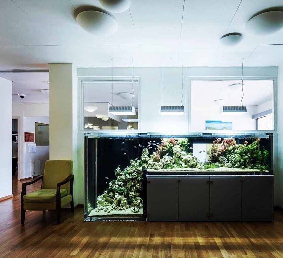 Stunning 45 Captivating Fish Tank Aquariums Design Ideas