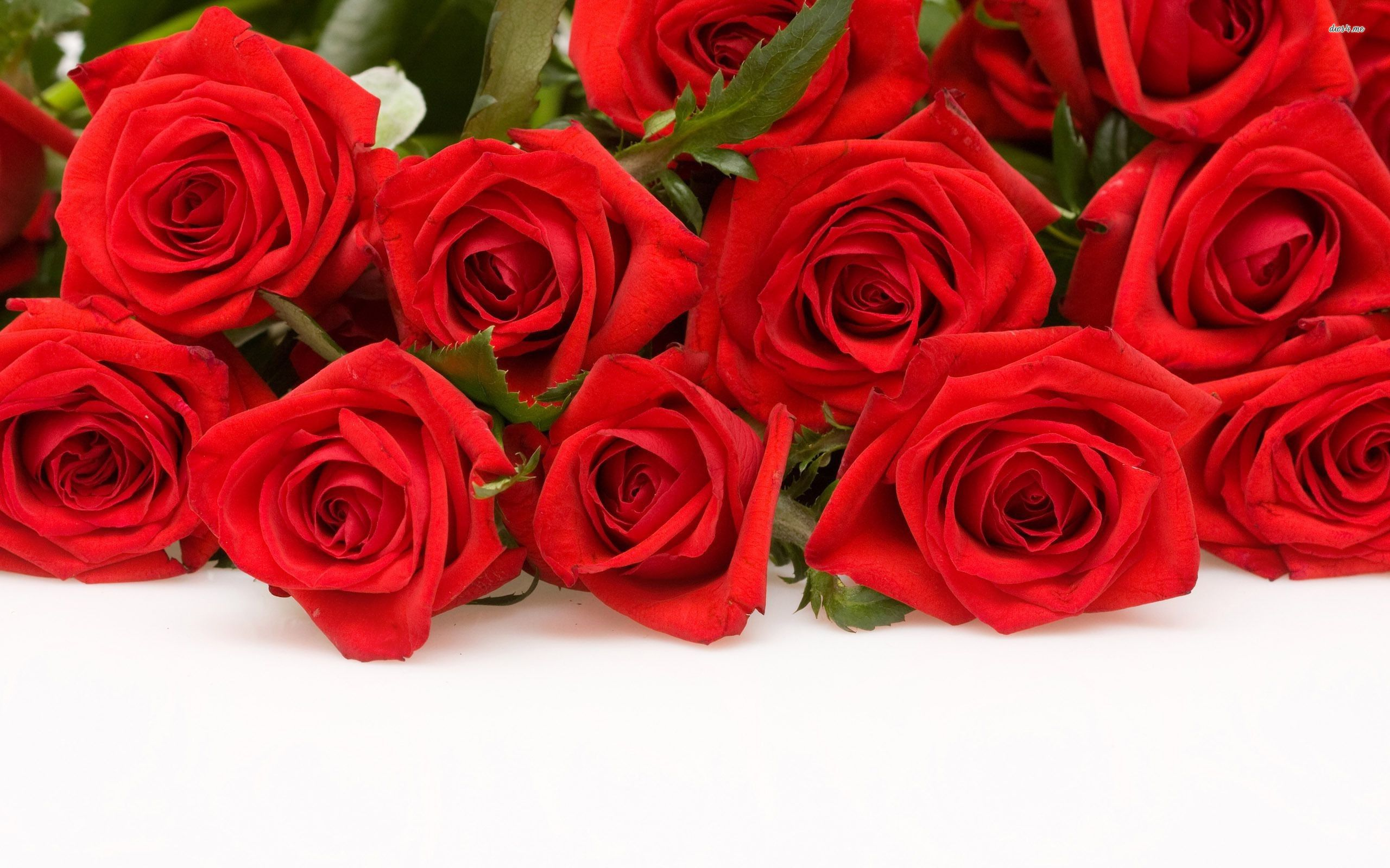 red rose flowers rose wallpapers wallpaper pictures of rose