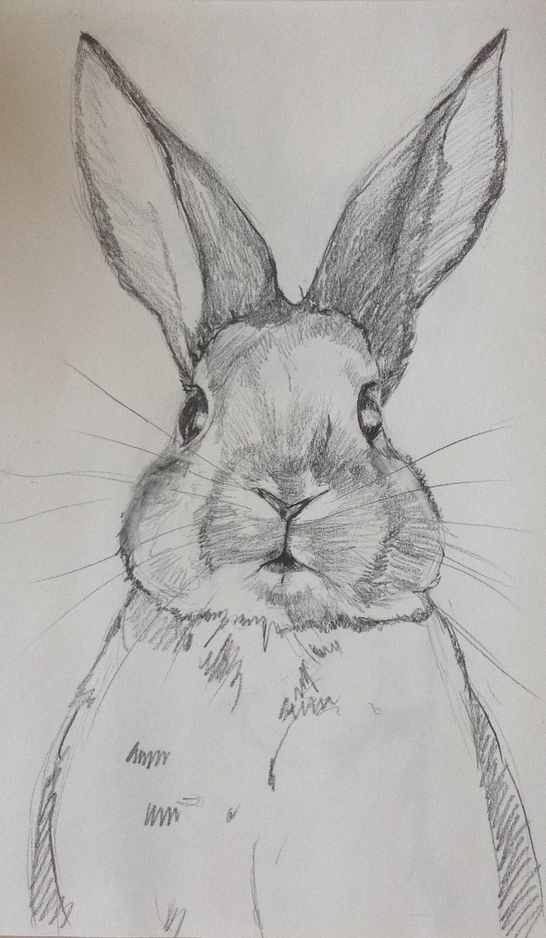 Pencil sketch. Sweet bunny. By Joan Ines Studio.