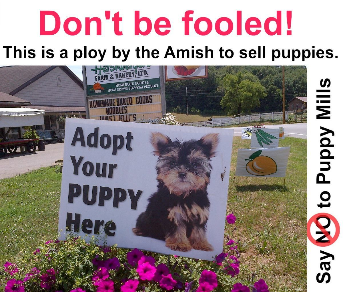 The Amish are amongst the WORST of the irresponsible