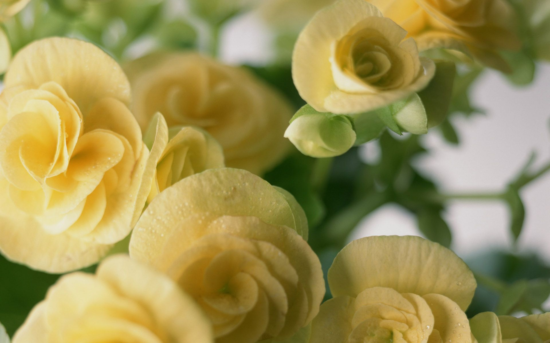download free flowers wallpapers | hd wallpapers depot pro