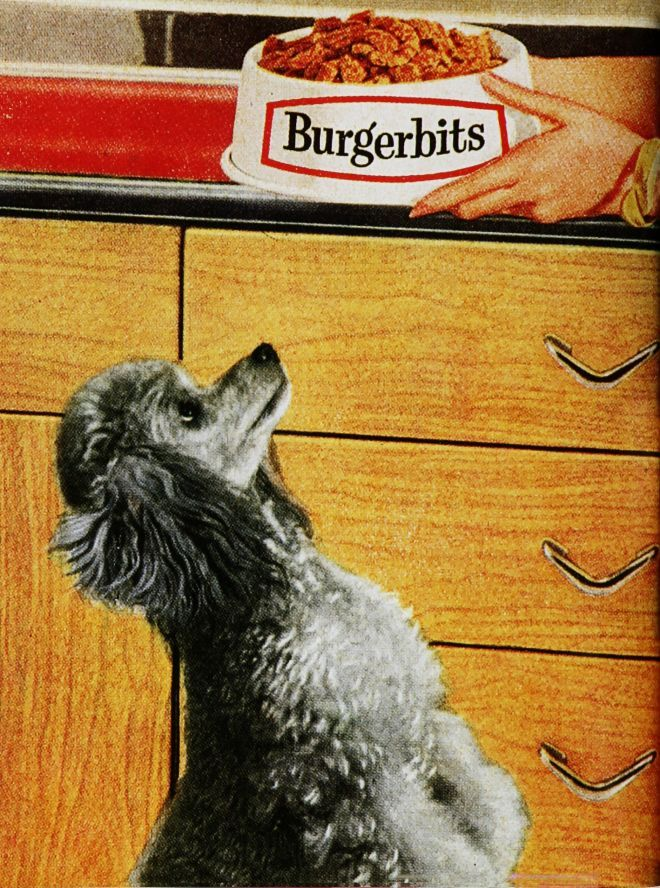 Vintage Animal Advertisements of the 1960s
