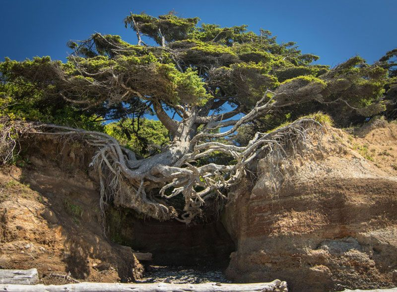 "Jeff Goldblum said it best in Jurassic Park, ""Life, uh.. finds a way"". And long after we're gone our green friends will remain.Below you will find 10 badass trees that refused to die. Let their …"