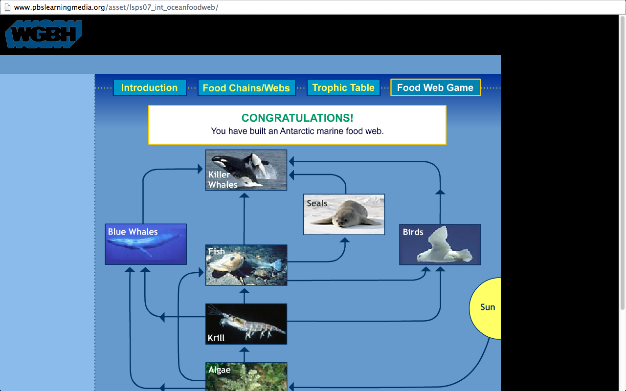 The Antarctic Food Web Game
