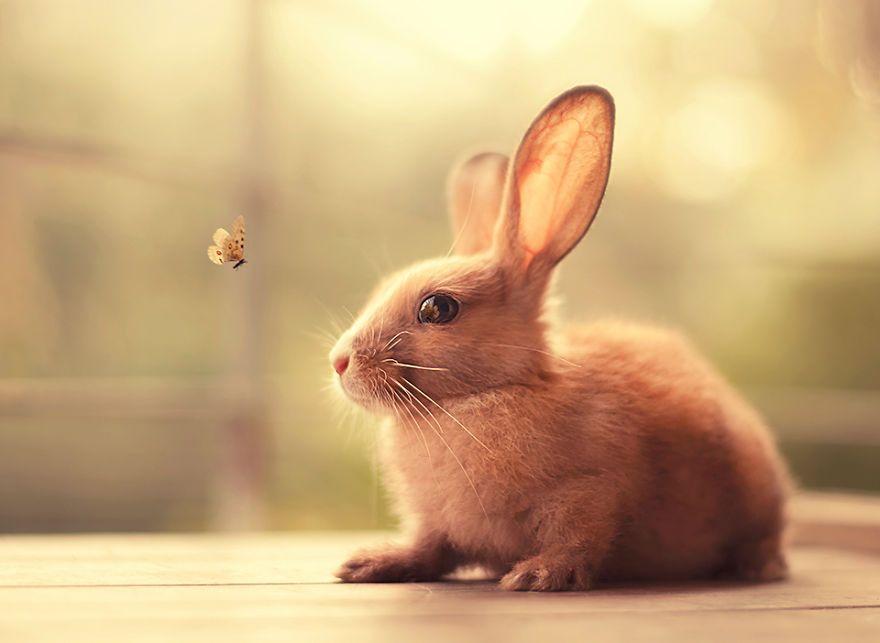 My Bunnies Are My Models かわいいウサギ 可愛すぎる動物 動物