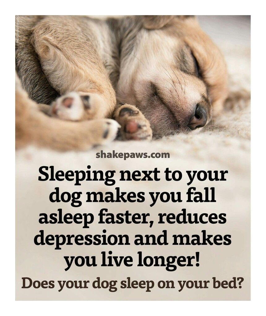 Sleeping Next To Your Dog Sleeping Dogs Dogs How To Fall
