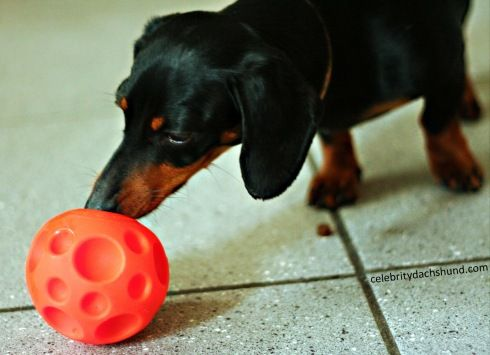 Doin Time At The Ottawa Doggy Daycare Center Doggy Crusoe The
