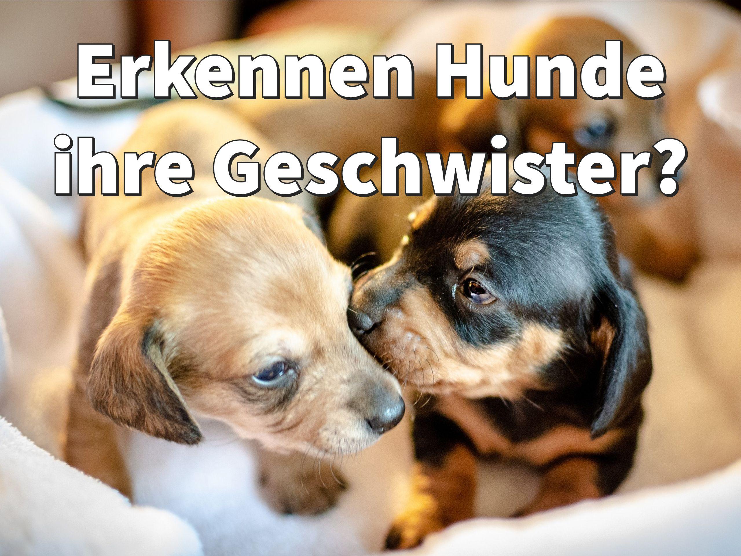 Wie Erkennen Hunde Ihre Geschwister Wieder Hunde Hunde Geruch Hundeverhalten