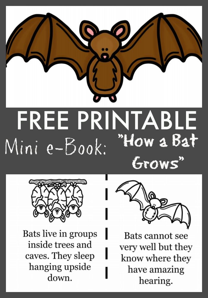 FREE quot How a Bat Grows quot Printable