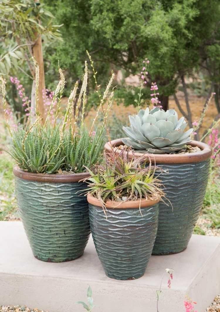 Tout Savoir Sur L Arrosage Cactus Et Plantes Succulentes