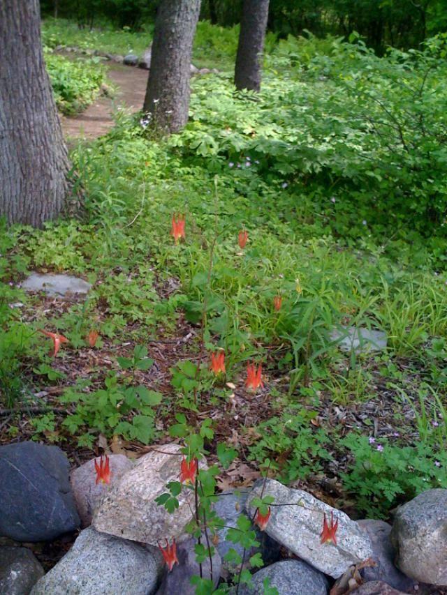 Botanical and Public Gardens of Metro Detroit Botanical