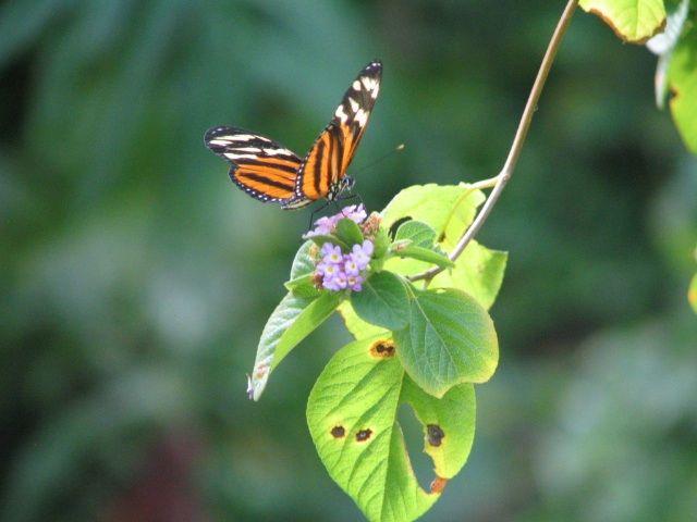 Las delicadas alas de una mariposa