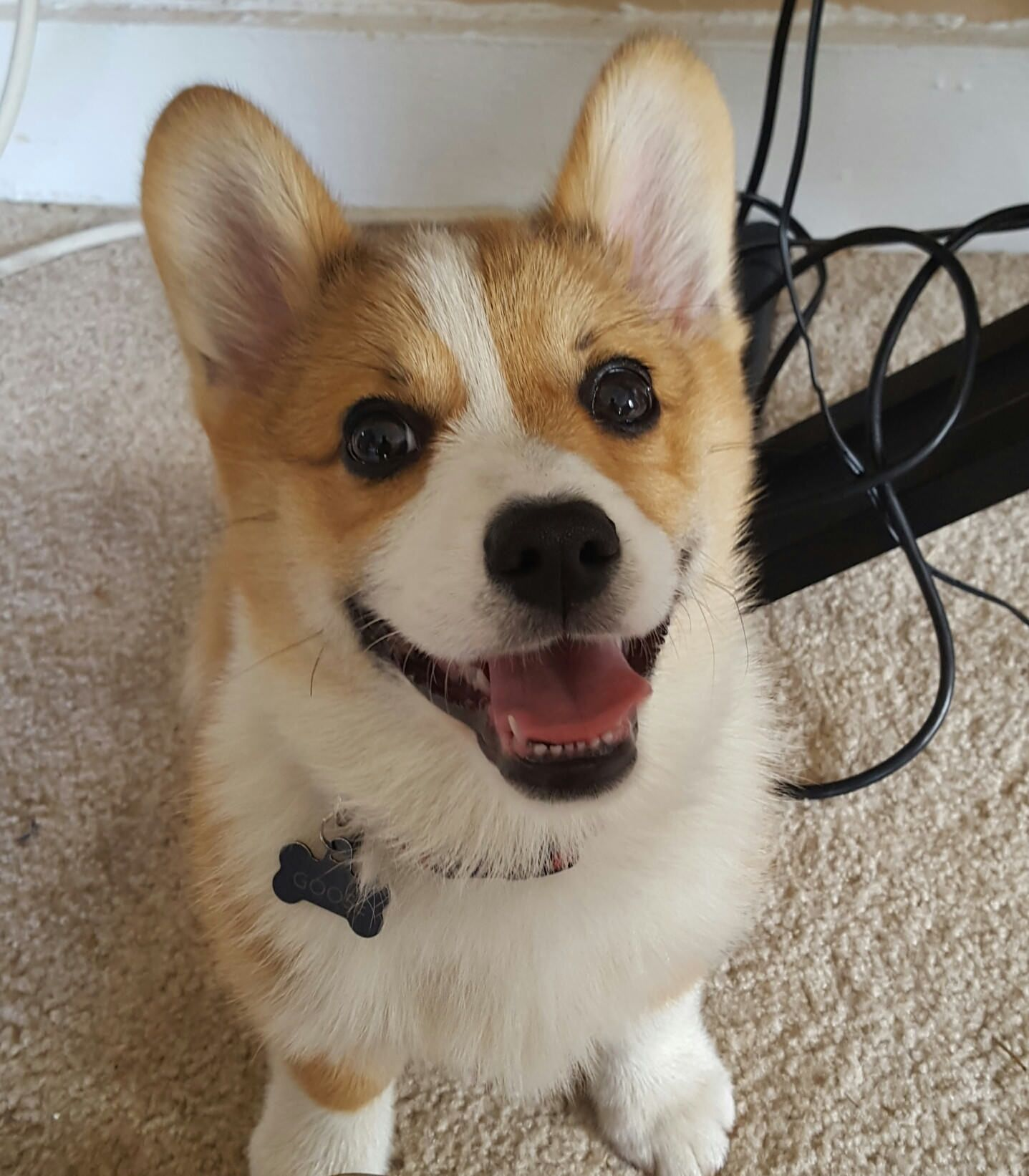 Happy Puppyhttps Imgur Com Dmjfxih Happy Puppy Corgi Puppies