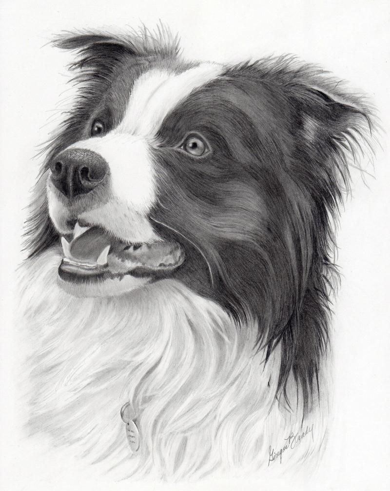 Tippy Border Collie Dog Paintings Border Collie Art Animal