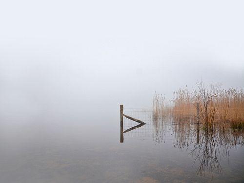 Morning Mist at Frensham Little Pond