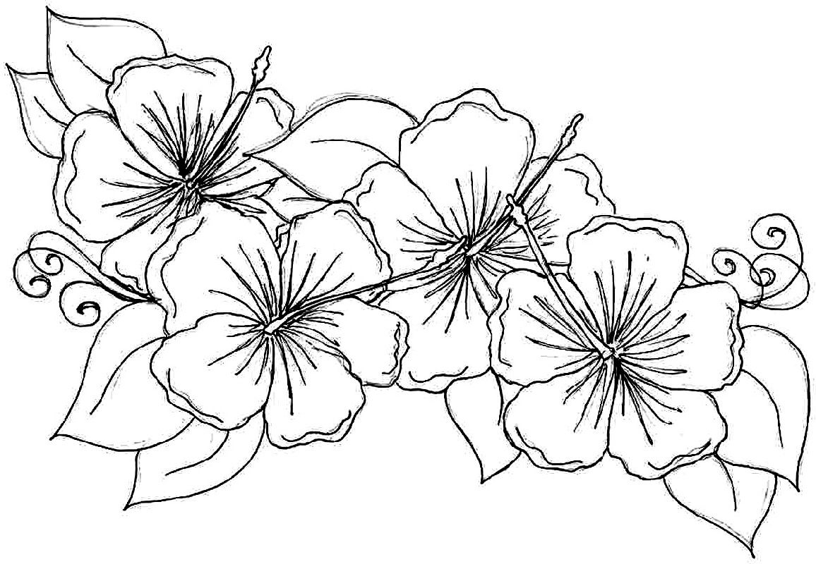 Hawaiian Flower Coloring Page For Girls Educative Printable Printable Flower Coloring Pages Flower Coloring Pages Flower Drawing