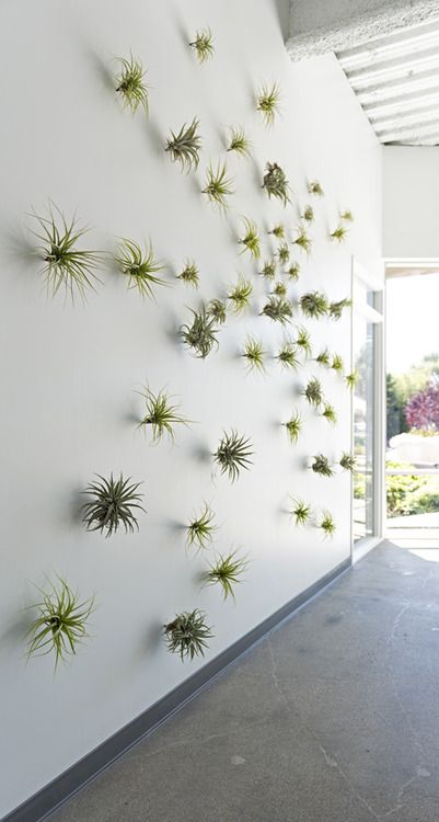Airplant Backdrop Modern Wedding Decor In 2019 Air Plants Office Interior
