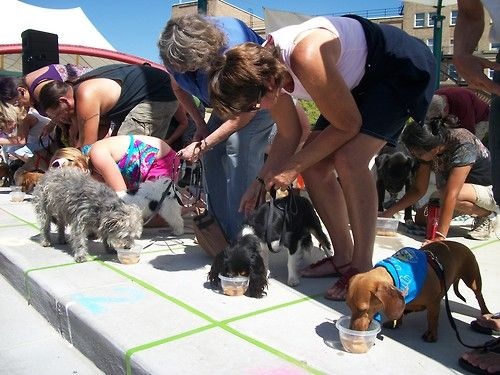 The Doggie Olympics are a little over a month away! How's training coming?