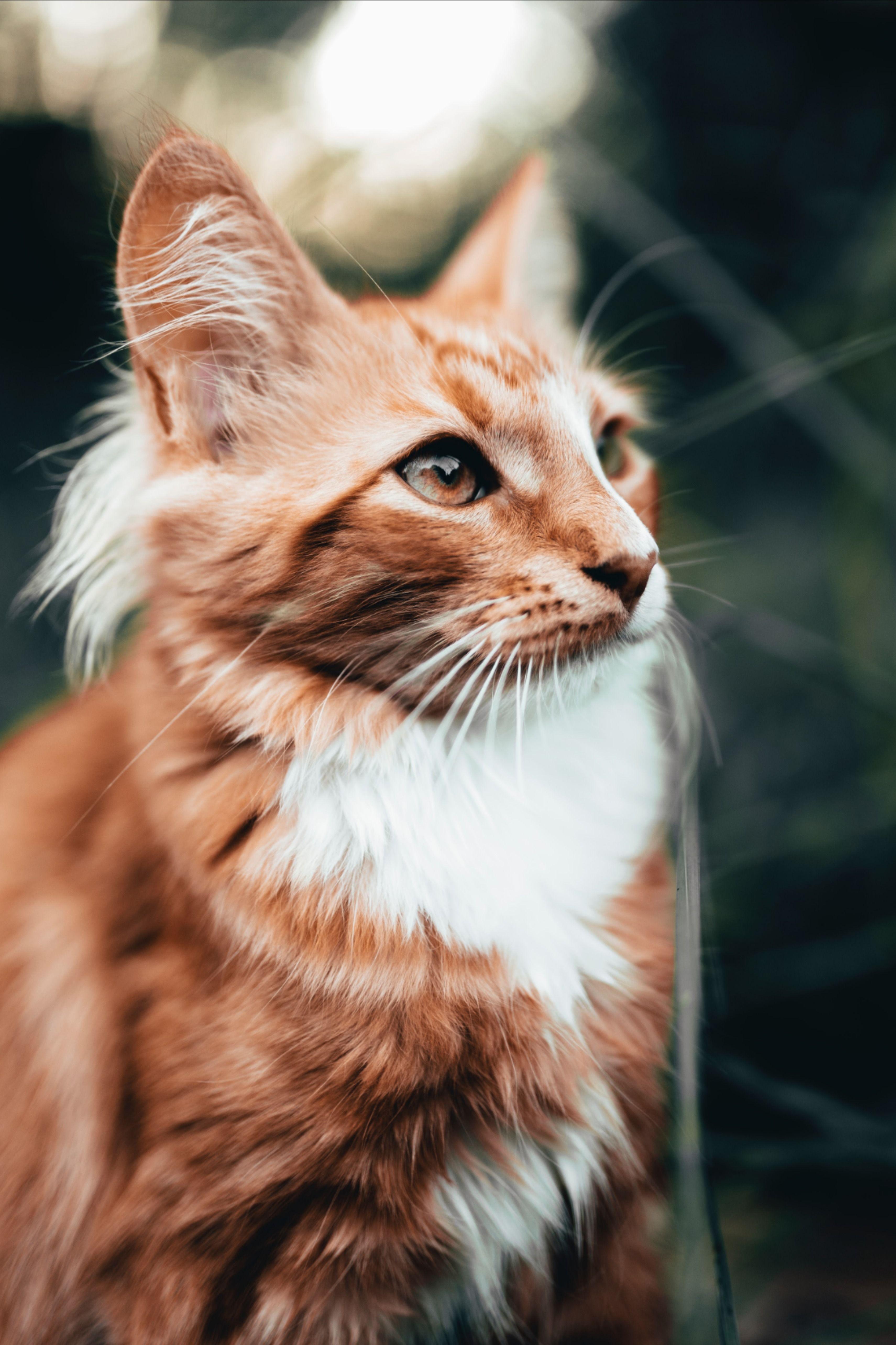 Chats Polkee La Place De Marche Qui Offre Le Meilleur Pour Votre Chat En 2020 Animaux De Compagnie Beaux Chats Animales