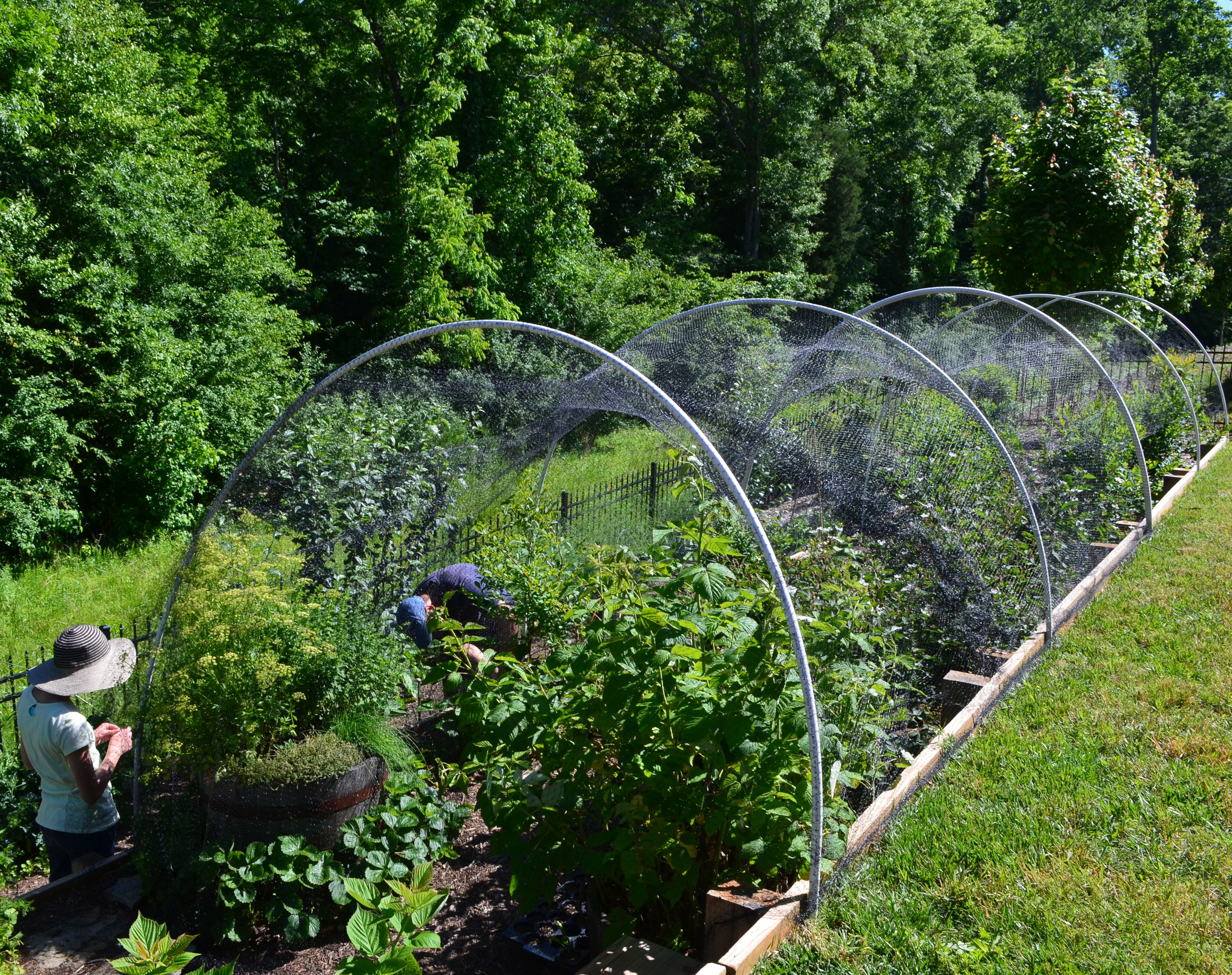gardening for netting pinterest bird pin garden gardens