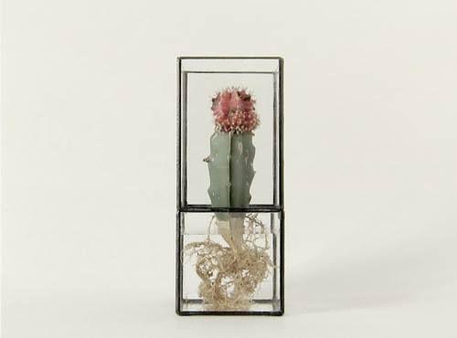 Hydra vases