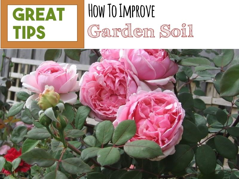 How To Prepare Soil For Gardening With Images Soil Garden