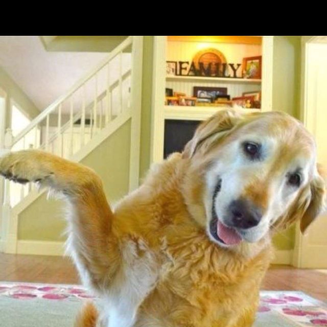 """Our dog giving a """" high five"""" ( :"""