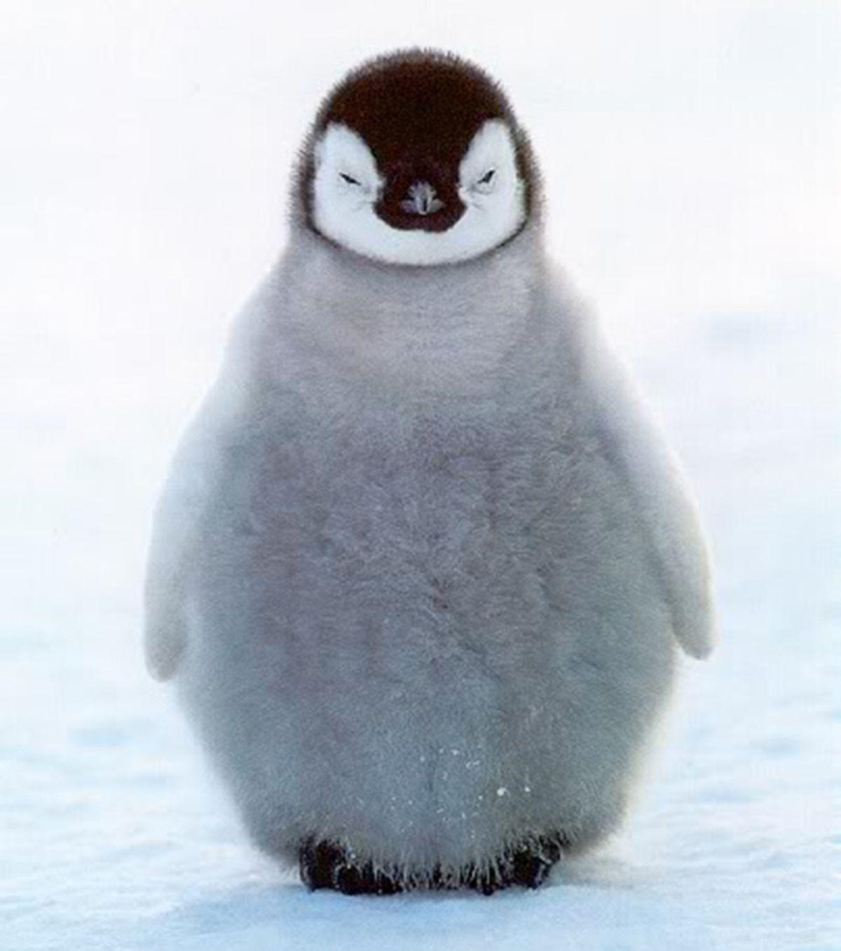 Baby Penguin Google Search So Cute Animals Cute Animal
