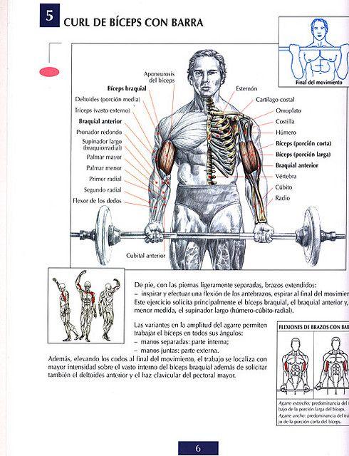 Ejercicios Por Zonas Musculares Ejercicios Para Biceps Curl De Bíceps Ejercicios De Biceps Biceps Con Barra