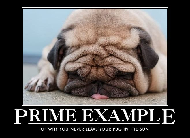 Hillarious Dog Memes Cute Animals Cute Pugs Funny Animal Pictures