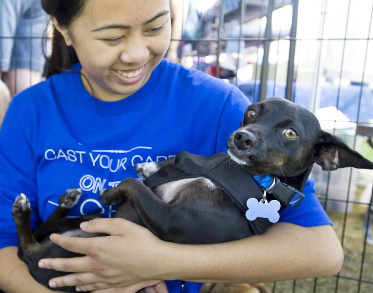 Photos South County Pet Expo draws thousands to Lake