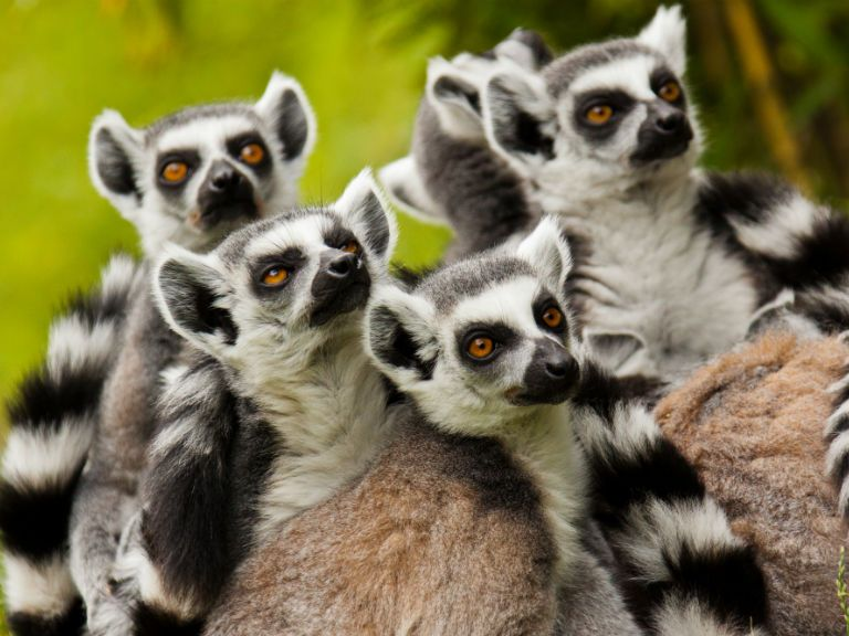"Meet Diane, our ""Madagascar – Land of the Lemurs"" tour manager. She's about to lead her second tour of the year. Check out what she had to say…."
