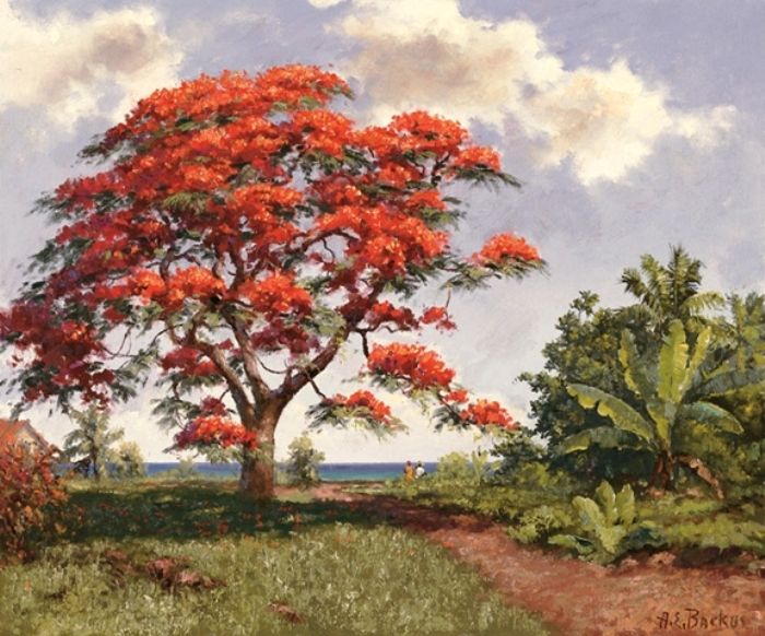 paintings of royal poincianas - Buscar con Google