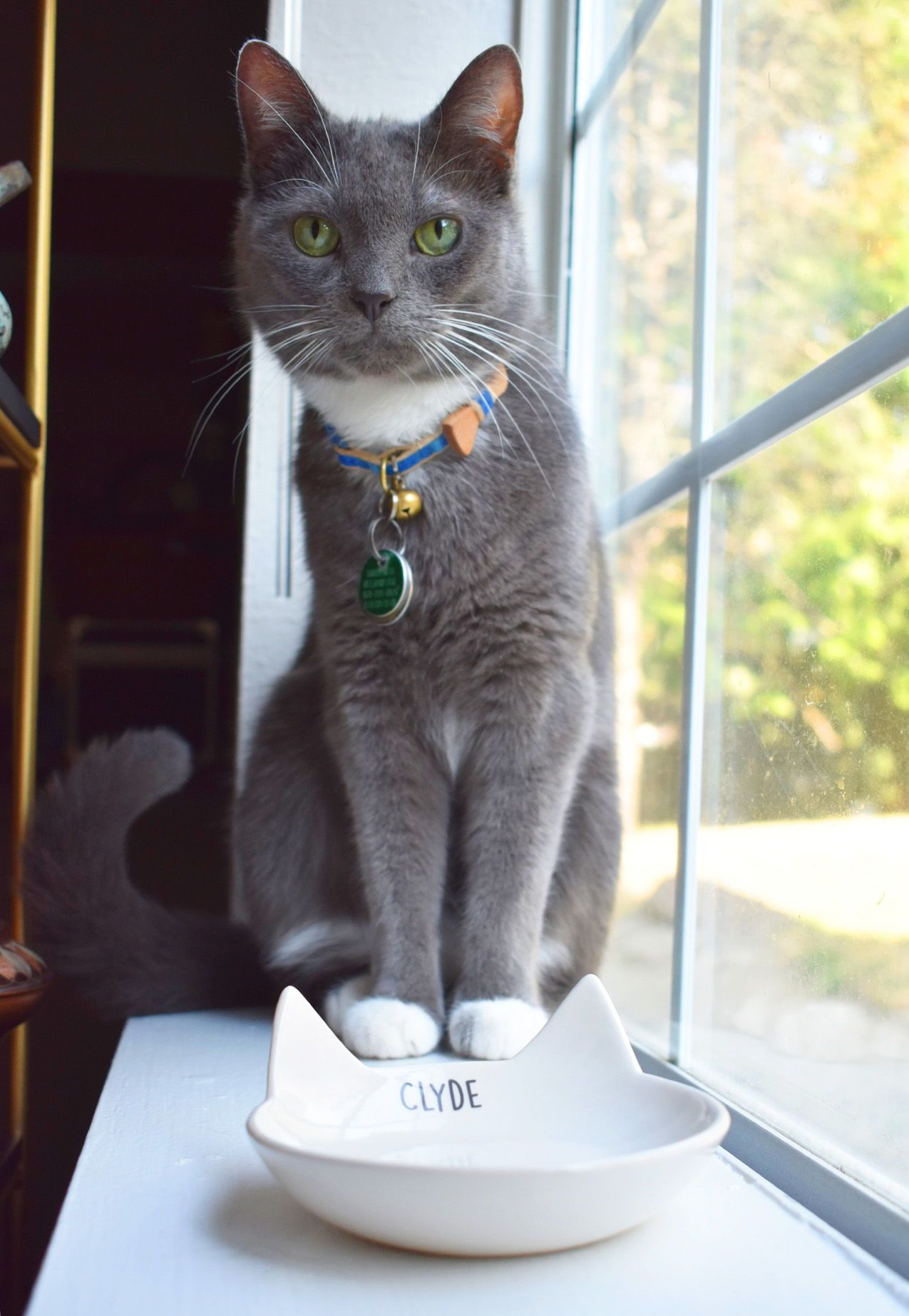 Personalized Cat Bowl, Custom Cat Dish, Cat Gift