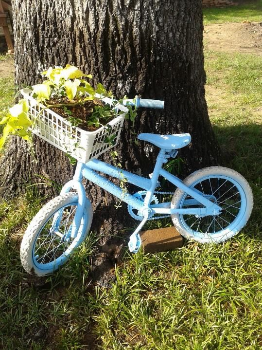 Bike Planter  Up cycled planter made from daughter's first bike. Spraypainted blue and added the basket. Those are sweet potato vines and ivy in the basket.