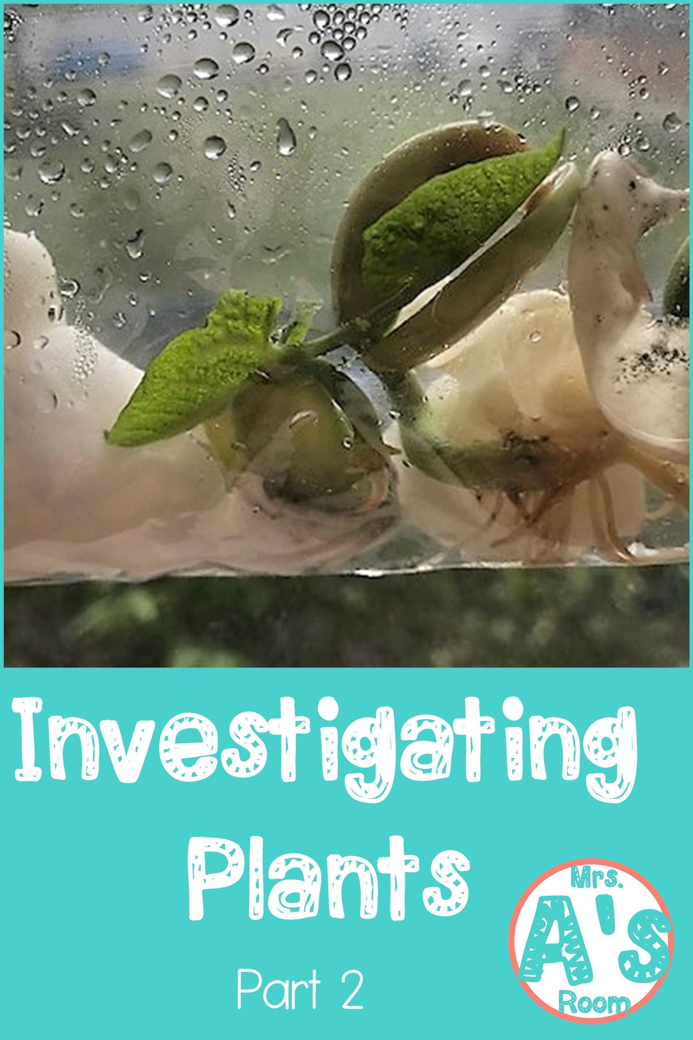 Investigating Plants Part 2