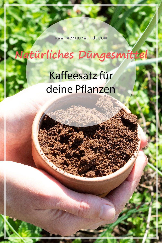 Kaffeesatz Als Dunger Fur Garten Und Topfpflanzen We Go Wild Kaffeesatz Pflanzen Kaffee
