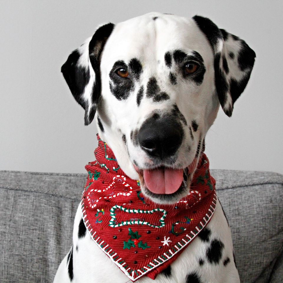 Matching Ugly Christmas Sweaters For Dog And Owner.Diy No Sew Ugly Christmas Sweater Dog Bandana Holidays