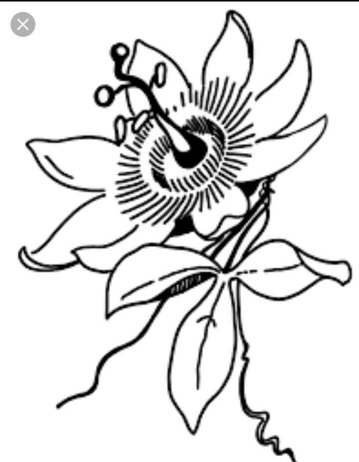 Pin De Sharon En Tattoo Ideas Ilustraciones Dibujos Ilustraciones De Flores