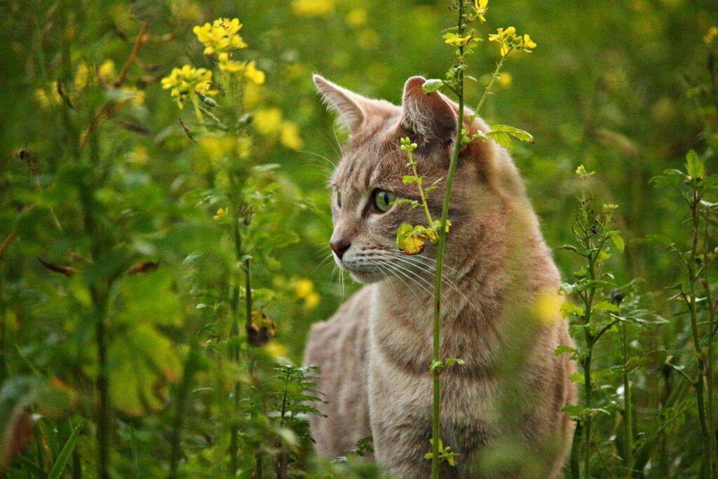 Rosliny Trujace Dla Kota Poznaj Objawy Ktore Powinny Cie Zaniepokoic Zobacz Czego Nie Powinien Dotykac Twoj Kot Co Ro Kittens Cutest Cats Cats And Kittens