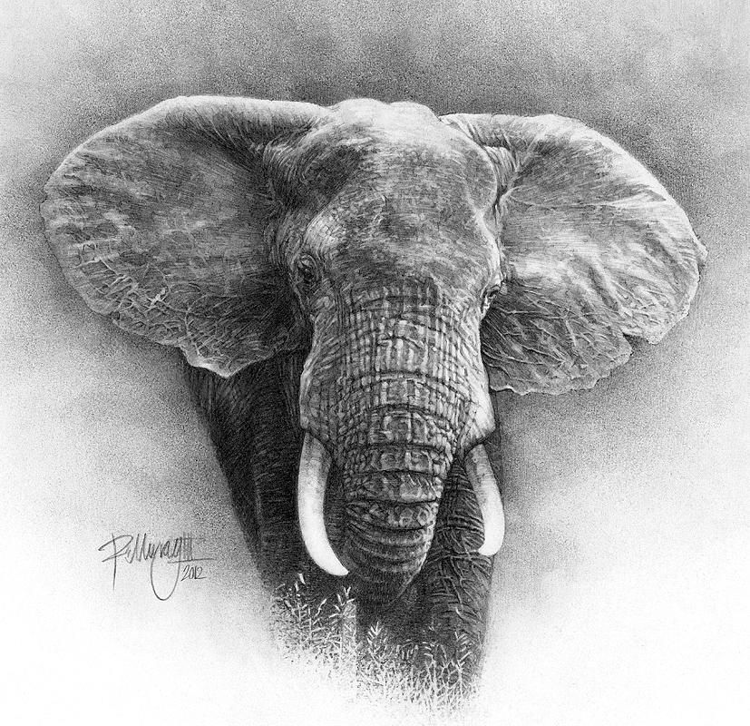 Pencil Drawing Okavango Elephant Canvas Print / Canvas Art ... Realistic Elephant Drawing