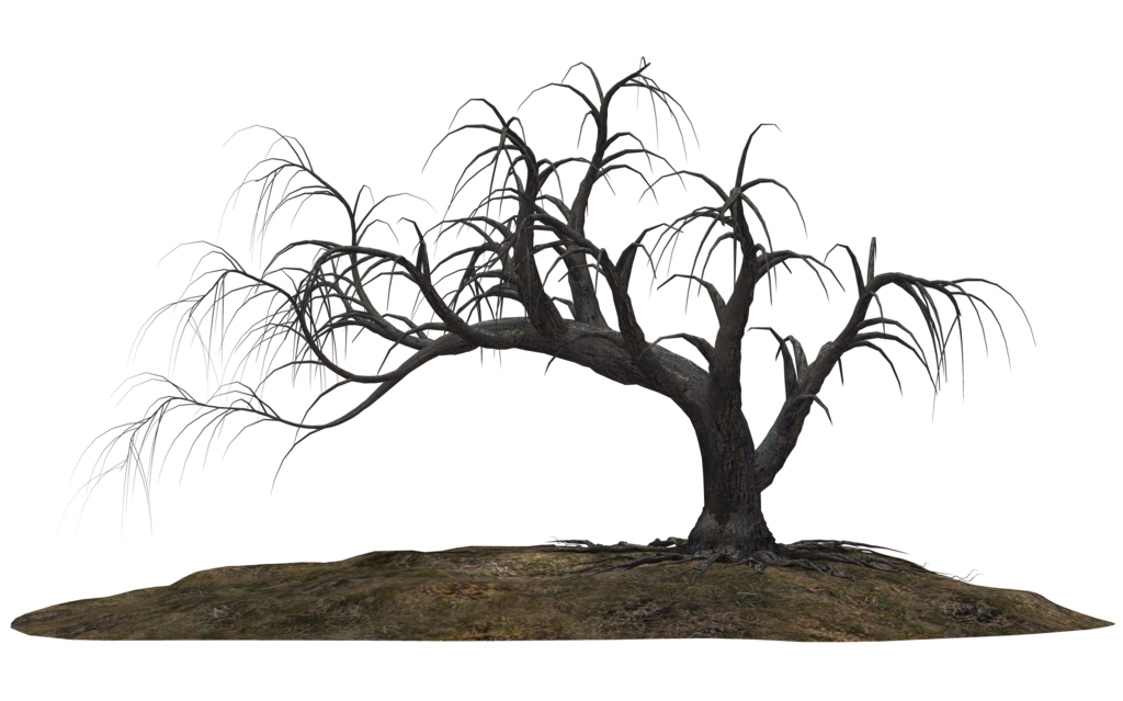 Creepy Tree 19 By Wolverine041269 D643srh Png 1024 639