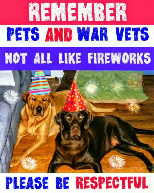 Pets And War Vets Not All Like Fireworks Please Be Courteous In