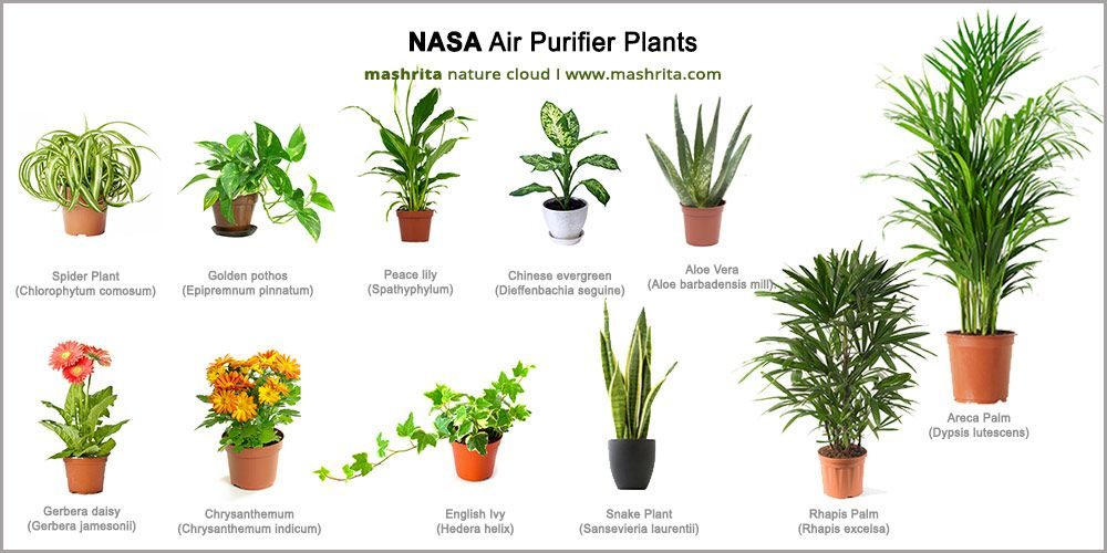 Image Result For The Top 10 Plants To Improve Air Quality