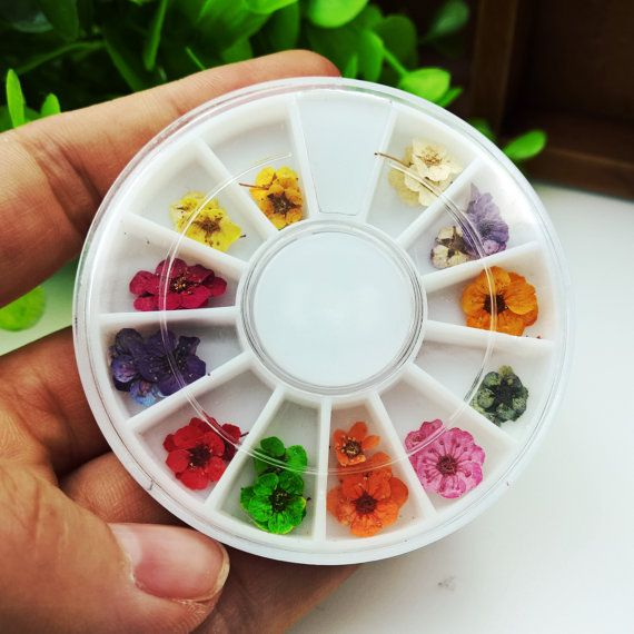 one small box 30pcs real dried flowers 12 colors inside ...