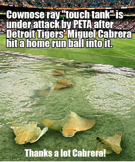 peta wants rays to remove fish tank from ballpark miguel cabrera homerun tampa bay rays miguel cabrera homerun tampa bay rays
